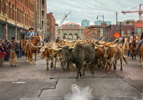 National-Western-Stock-Show-And-Rodeo